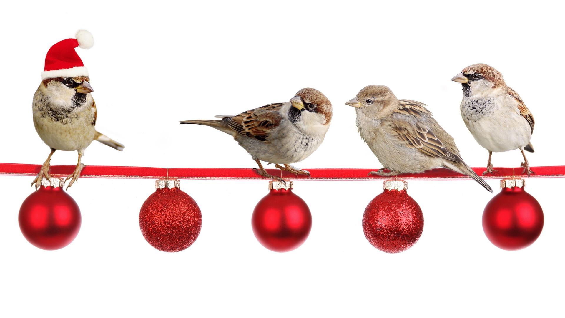 Ich wünsche allen ein Frohes Weihnachtsfest......