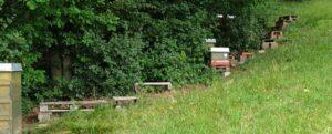 Diebstahl von Bienenvölkern in Schnaittach!