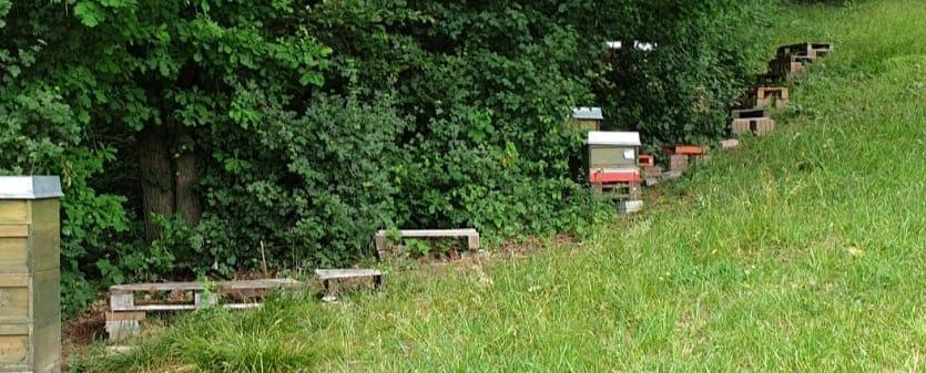 Bienendiebstahl in Schnaittach